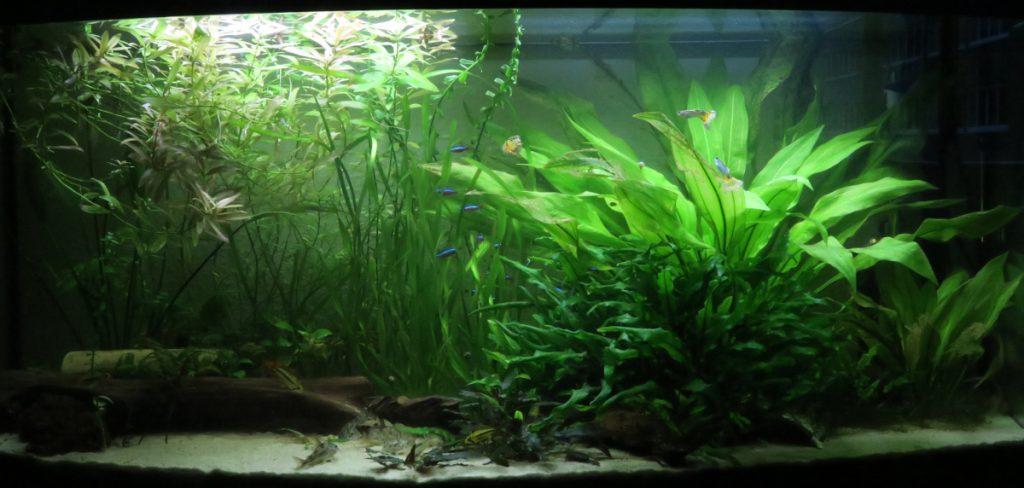Aquarium vor der Gärtner Aktion
