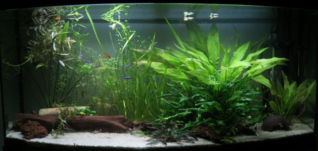 Aquarium nach der Gärtner Aktion