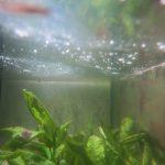 kahmhaut im aquarium