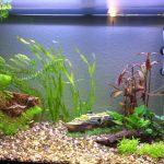 aquarium erste einrichtung