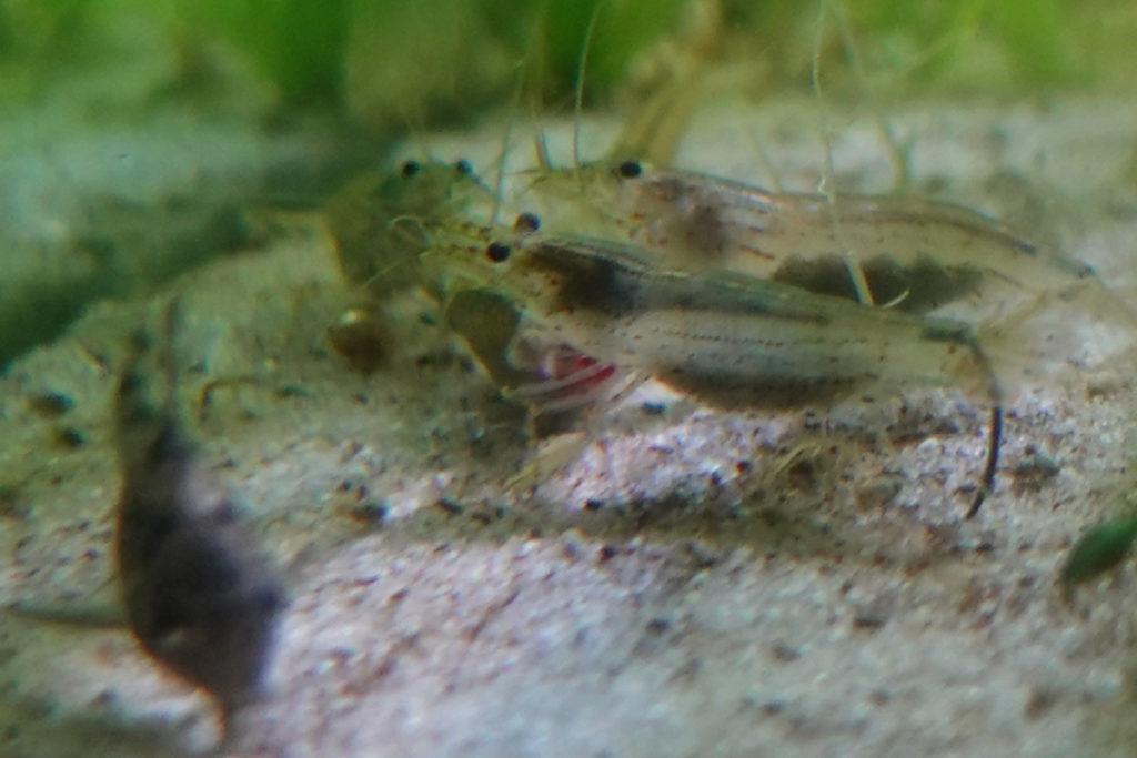 fressnapf-tote-fische